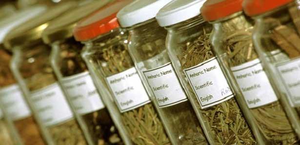 boyun-agrisi-tedavisinde-bitkisel-ilaclar.jpg